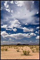 Sandy flat and clouds, Sonoran Desert National Monument. Arizona, USA (color)