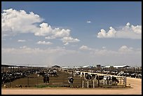 Cattle feedlot, Maricopa. Arizona, USA