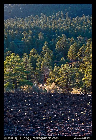 Cinder and forest. Sunset Crater Volcano National Monument, Arizona, USA