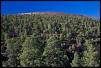 Pine trees on slopes of crater, Sunset Crater Volcano National Monument. Arizona, USA