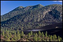 Cinder-covered slopes, Sunset Crater Volcano National Monument. Arizona, USA