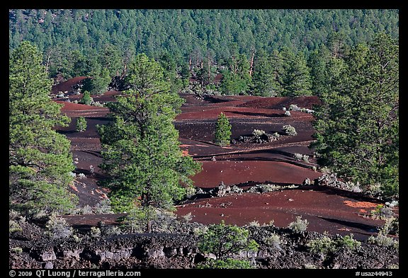 Pine trees, hardened lava, and red cinder, Sunset Crater Volcano National Monument. Arizona, USA