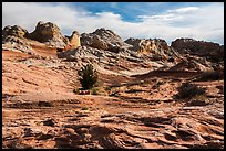 Soft sediment deformation landscape. Vermilion Cliffs National Monument, Arizona, USA ( color)