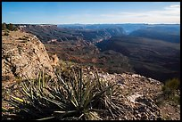 Yucca and Northwest Grand Canyon. Parashant National Monument, Arizona, USA ( color)