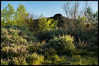 Riparian environment, Pakoon Springs. Parashant National Monument, Arizona, USA ( color)
