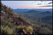 Lava field and desert vegetation on slopes of Table Top Mountain at twilight. Sonoran Desert National Monument, Arizona, USA ( color)