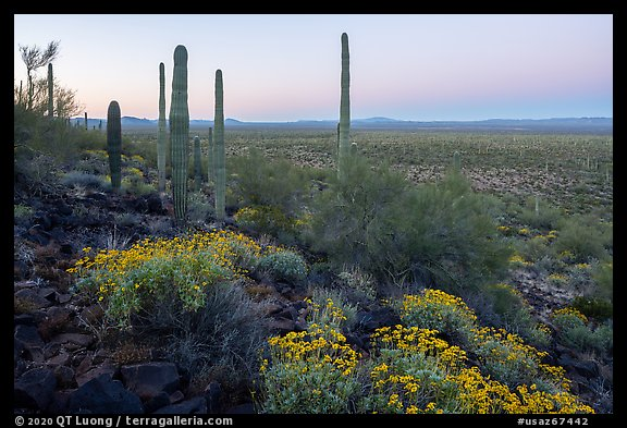 Vekol Valley in springtime at dawn. Sonoran Desert National Monument, Arizona, USA (color)