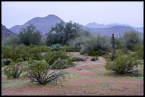 Margies Cove in the rain. Sonoran Desert National Monument, Arizona, USA ( color)