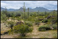 Margies Cove, North Maricopa Mountains Wilderness. Sonoran Desert National Monument, Arizona, USA ( color)