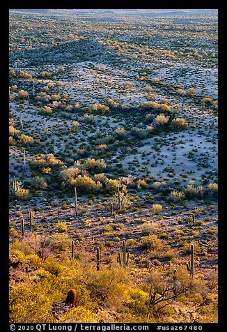 Shrubs and cactus, late afternoon. Sonoran Desert National Monument, Arizona, USA (color)