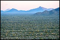 Vekol Valley and Vekol Mountains at sunset. Sonoran Desert National Monument, Arizona, USA ( color)