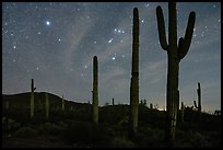 Saguaro cactus and Javelina Mountains under stary sky with Orion. Sonoran Desert National Monument, Arizona, USA ( color)