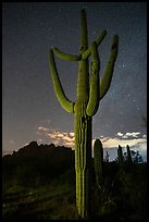 Saguaro cactus, Ragged Top profile, and starry sky. Ironwood Forest National Monument, Arizona, USA ( color)