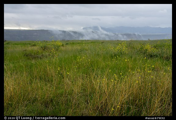 Tall grasses, spring wildflowers with foggy canyon. Agua Fria National Monument, Arizona, USA (color)