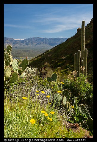 Wildflowers and cacti, Tonto National Monument. Tonto Naftional Monument, Arizona, USA (color)