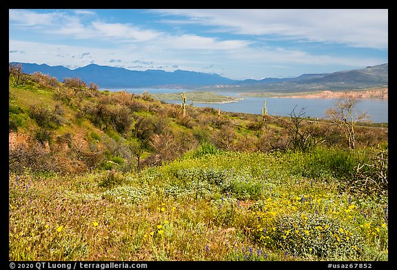 Wildflowers and Theodore Roosevelt Lake, Tonto National Monument. Tonto Naftional Monument, Arizona, USA (color)