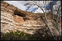 Limestone cliff with Sinagua dwelling, Montezuma Castle National Monument. Arizona, USA ( color)