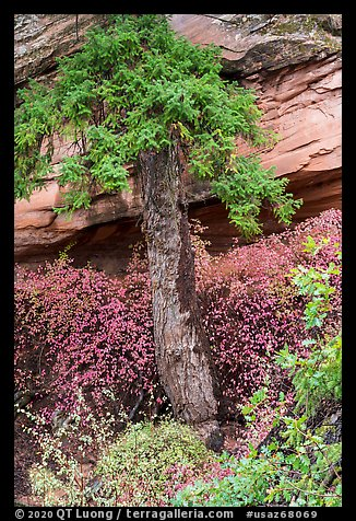 Flowers, pine, and sandstone. Navajo National Monument, Arizona, USA (color)