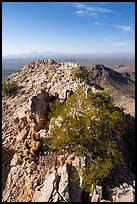 Waterman Peak summit ridge. Ironwood Forest National Monument, Arizona, USA ( color)