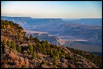 Grand Canyon from Mt Logan. Grand Canyon-Parashant National Monument, Arizona, USA ( color)
