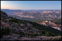 Grand Canyon from Mt Logan, dawn. Grand Canyon-Parashant National Monument, Arizona, USA ( color)
