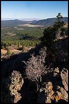 Potato Valley from Mt Logan. Parashant National Monument, Arizona, USA ( )