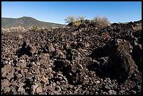 Lava flow near Mt Logan. Parashant National Monument, Arizona, USA ( )