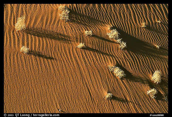 Bushes on sand dune. Canyon de Chelly  National Monument, Arizona, USA