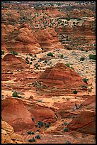 Sandstone mounds, North Coyote Buttes. Vermilion Cliffs National Monument, Arizona, USA ( color)