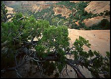 Monument Canyon view, Colorado National Monument. Colorado National Monument, Colorado, USA ( color)