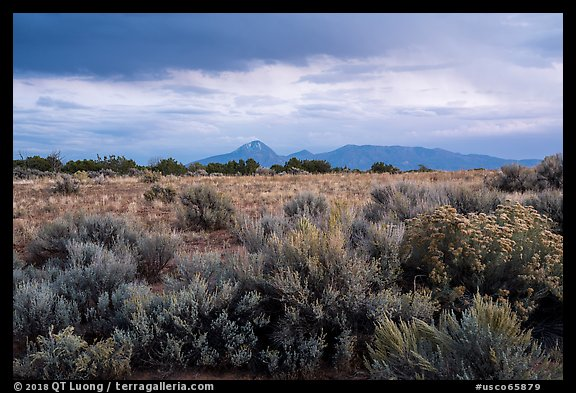 Shrubs on flats and Sleeping Ute Mountain, evening. Canyon of the Ancients National Monument, Colorado, USA (color)