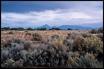 Shrubs on flats and Sleeping Ute Mountain, evening. Canyon of the Anciens National Monument, Colorado, USA ( color)