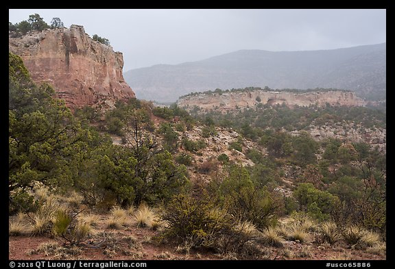 Sandstone cliffs in rain. Canyon of the Anciens National Monument, Colorado, USA (color)