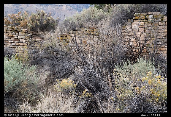 Shrubs and Lower House wall. Yucca House National Monument, Colorado, USA (color)