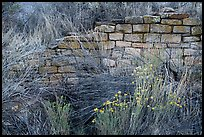Shrubs and wall detail. Yucca House National Monument, Colorado, USA ( color)