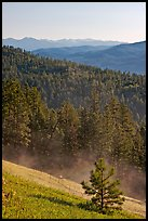Slope with meadow and forest, Carson National Forest. New Mexico, USA