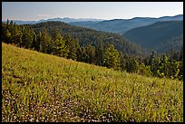 Wildflowers, forest and mountains, Carson National Forest. New Mexico, USA