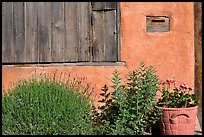 Flowers, mailbox, and weathered window. Santa Fe, New Mexico, USA (color)