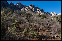 Bare trees in winter below the Needles above Aguirre Springs. Organ Mountains Desert Peaks National Monument, New Mexico, USA ( color)