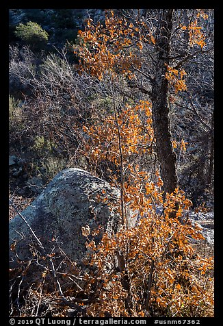 Shurbs and tree with fall foliage remnants. Organ Mountains Desert Peaks National Monument, New Mexico, USA (color)