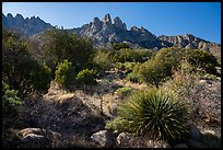 Aguirre Springs Desert plants and Rabbit Ears. Organ Mountains Desert Peaks National Monument, New Mexico, USA ( color)