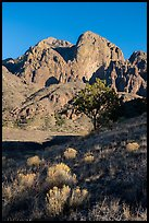 Organ Peak from Dripping Springs Natural Area. Organ Mountains Desert Peaks National Monument, New Mexico, USA ( color)