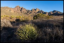 Sotol, Organ Peak, and Baldy Peak. Organ Mountains Desert Peaks National Monument, New Mexico, USA ( color)