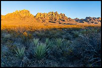 Sotol and Organ Mountains at sunset. Organ Mountains Desert Peaks National Monument, New Mexico, USA ( color)
