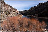 Red willows and Rio Grande River in winter. Rio Grande Del Norte National Monument, New Mexico, USA ( )