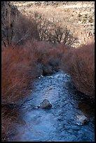 Rio Hondo near Rio Grande Gorge. Rio Grande Del Norte National Monument, New Mexico, USA ( )