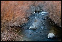 Stream and willows. Rio Grande Del Norte National Monument, New Mexico, USA ( )