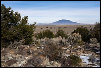 Sagebrush, desert plants, and Ute Mountain. Rio Grande Del Norte National Monument, New Mexico, USA ( color)