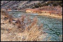 Riparian vegetation along the Rio Grande River. Rio Grande Del Norte National Monument, New Mexico, USA ( )