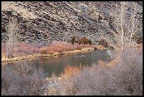Willows and trees along the Rio Grande River. Rio Grande Del Norte National Monument, New Mexico, USA ( )